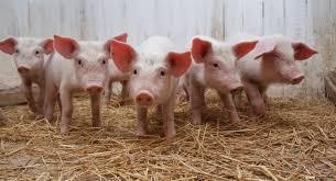 PIG Meeting